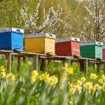 miel-de-fleur